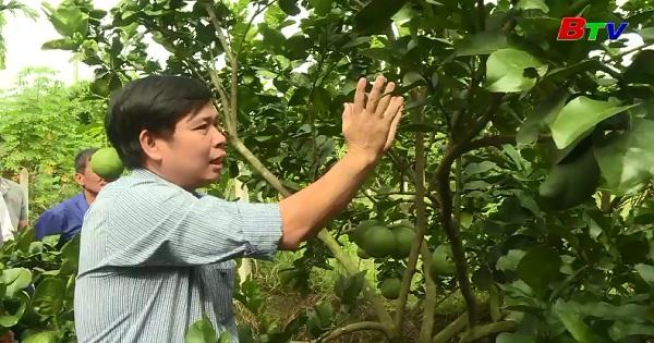 Nông nghiệp sạch - Xu thế tất hiếu cho nông thôn mới ở Bình Dương