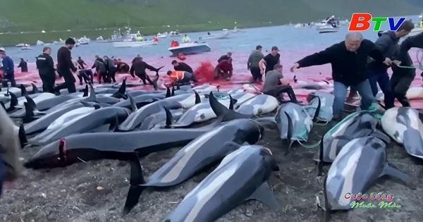 Hơn 1400 con cá heo bị thảm sát trong một ngày