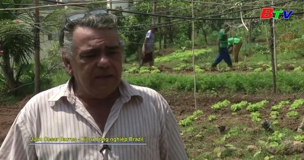 Brazil - Người dân Rio với chương trình cung cấp  sản phẩm Organic