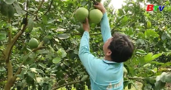 Đầu tư các hình thức tổ chức sản xuất ở nông thôn