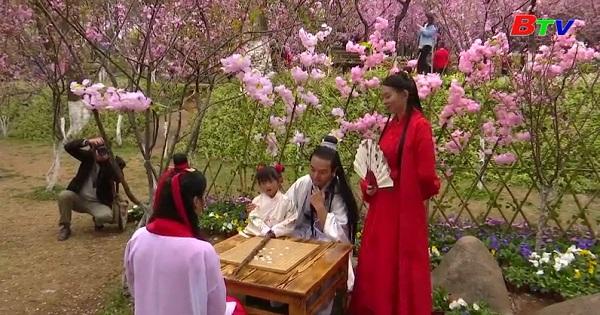 Tây Nam Trung Quốc rực rỡ với những cánh đồng hoa