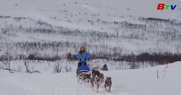 Sôi động cuộc đua chó kéo xe trượt tuyết