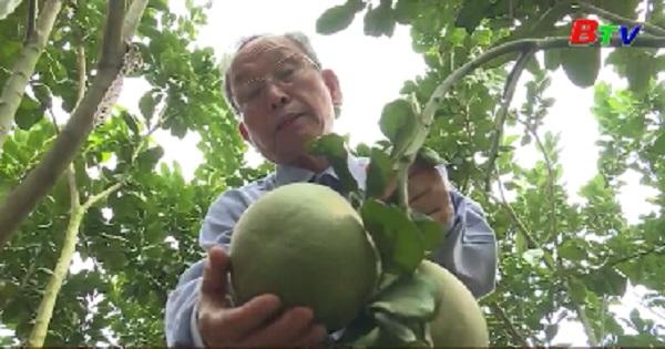 Bình Dương nâng cao chất lượng phong trào nông dân kinh doanh sản xuất giỏi