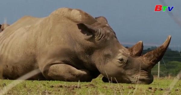 Vi khuẩn kháng thuốc đe dọa loài tê giác  đen ở Kenya