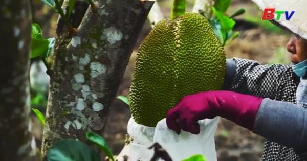 Hiệu quả của quá trình canh tác và chế biến nông sản hữu cơ