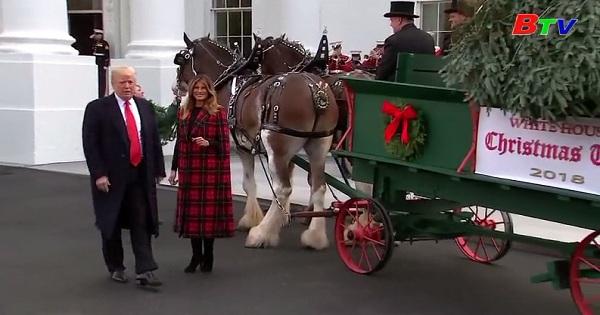 Nhà Trắng đón cây thông giáng sinh
