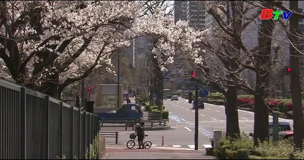 Nhật Bản - Mùa hoa anh đào vắng người xem