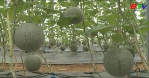 Nông sản kỹ thuật cao phục vụ thị trường Tết