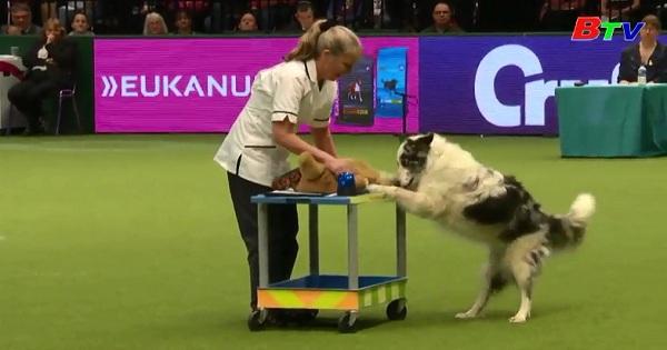 Ấn tượng trong lễ hội chó cưng Cruft ở Birmingham