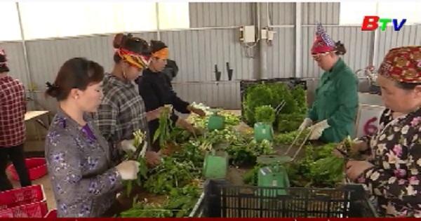 Bình Dương hỗ trợ kinh tế tập thể nông nghiệp