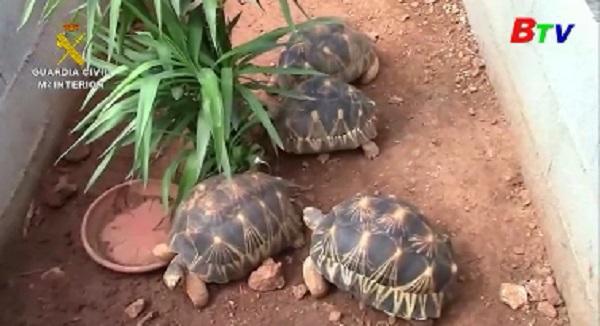 Phát hiện trại nuôi rùa bất hợp pháp lớn nhất châu Âu