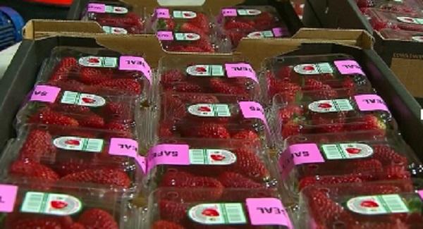 Australia nâng mức phạt tù với tội danh phá hoại hoa quả có chủ đích