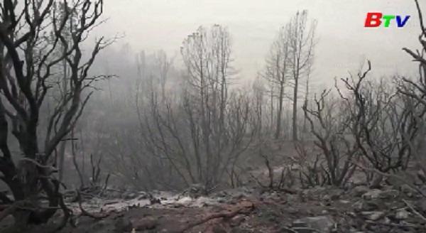 Mỹ - Bang California nỗ lực khống chế cháy rừng