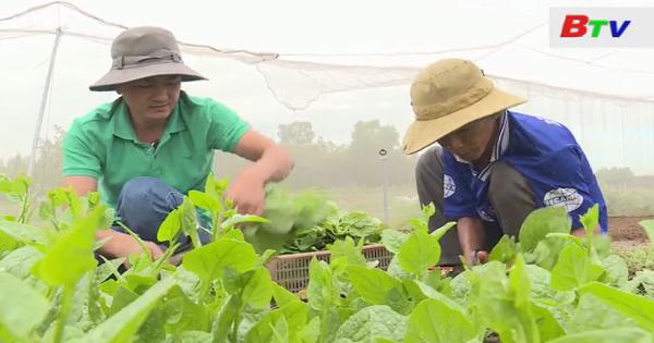 Xây dựng và phát triển chuỗi nông sản an toàn