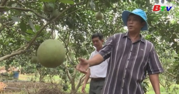 Bình Dương đầu tư vùng chuyên canh cây ăn trái