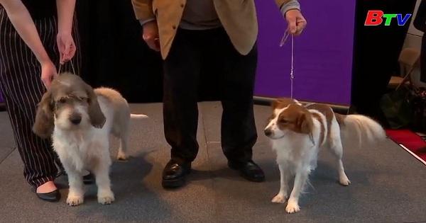 Thêm hai giống chó mới tham gia cuộc thi Westminster Kennel Club Dog Show lần thứ 143