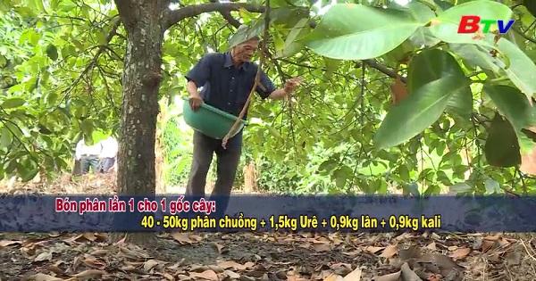 Chăm sóc vườn cây mùa ra hoa kết trái