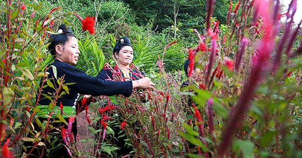 Tết Hoa của đồng bào Cống ở Lả Chà, Điện Biên
