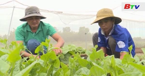 Nhân rộng mô hình sản xuất rau sạch