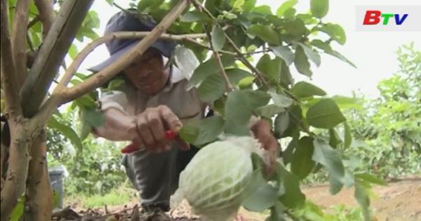 Nông dân chủ động xây dựng mô hình nông nghiệp hiệu quả