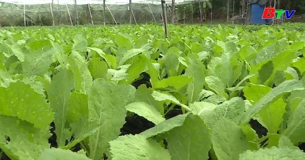 Kỹ thuật trồng rau an toàn hướng hữu cơ
