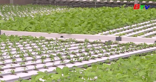 Phương pháp trồng rau thủy canh hồi lưu