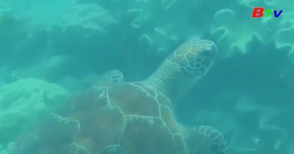 Loài rùa biển Sargasso ở Bắc Đại Tây Dương bị đe dọa do rác thải nhựa