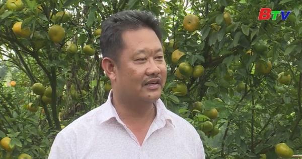 Bình Dương đầu tư vùng cây ăn trái có múi