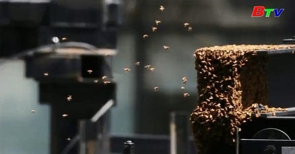 30.000 con ong vây bủa Quảng trường One Times ở New York
