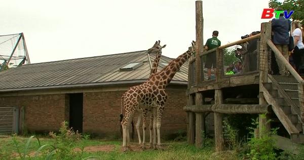 Vườn thú Luân Đôn kiểm tra cân nặng, kích thước vật nuôi