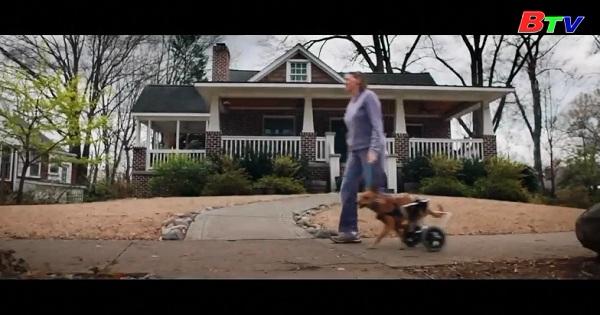 American Animals - Bộ phim hình sự kể về câu chuyện có thật