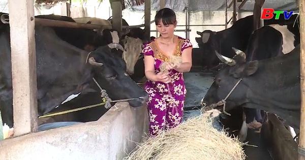 Phát triển kinh tế gia đình tử nghề nuôi bò sữa