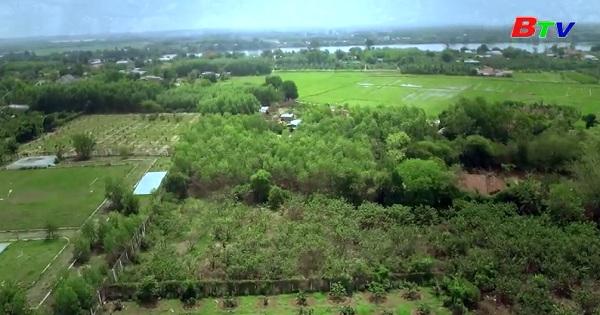 Bức tranh sáng của nông nghiệp - nông thôn Bình Dương
