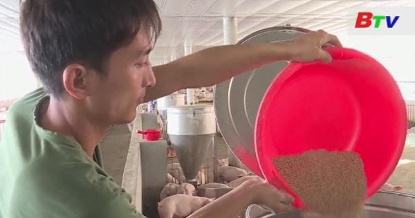 Nông dân chăn nuôi công nghệ cao