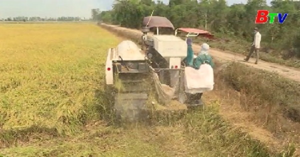 Đề xuất Thủ tướng cho phép tiếp tục xuất khẩu gạo có kiểm soát