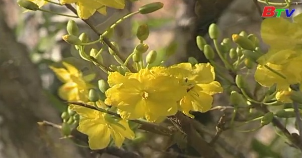 Hoàng Mai - Bách hoa khôi