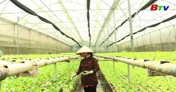Bình Dương phát huy hiệu quả mô hình nông nghiệp ứng dụng công nghệ cao