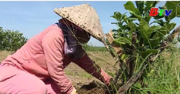 Nhiều giải pháp thực hiện cơ cấu ngành nông nghiệp