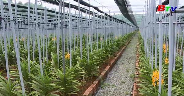 Kỹ thuật trồng hoa phong lan Mokara