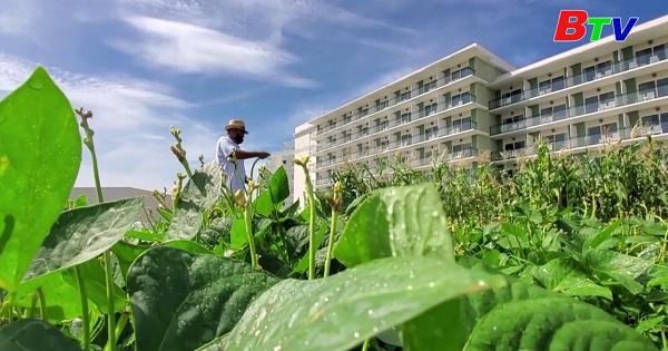 Các khách sạn ở Cu Ba tự trồng rau sạch để  giữ chân du khách