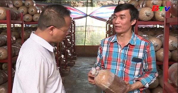 Người nông dân trẻ trồng nấm