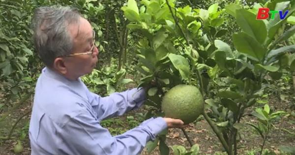 Bình Dương nâng cao giá trị ngành nông nghiệp