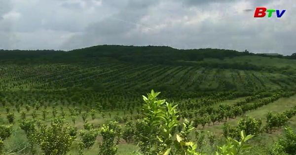 Diện mạo nông thôn mới ở Bắc Tân Uyên