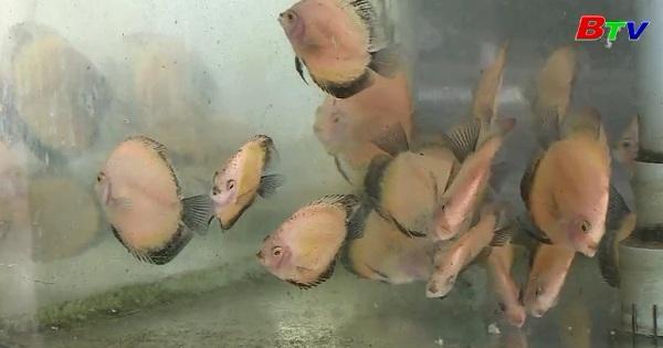 Hiệu quả từ mô hình nuôi cá cảnh