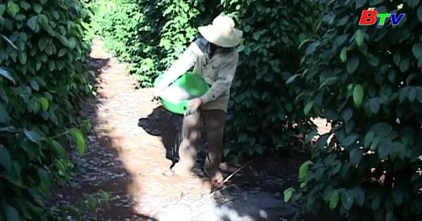 Vai trò của nấm Trichoderma đối với cây trồng