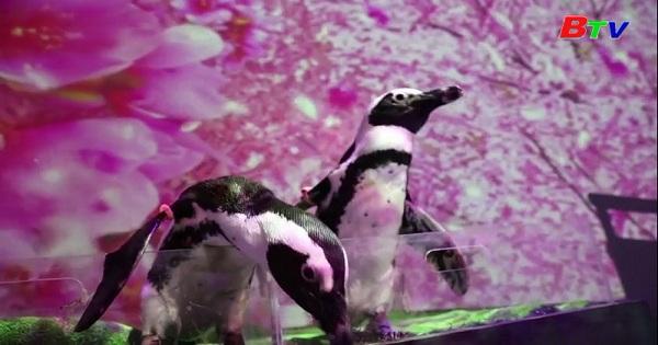 Nhật Bản - Thủy cung phát chương trình biểu diễn trực tuyến