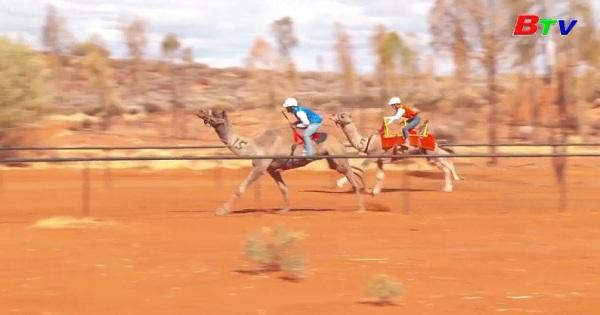 Australia - Cuộc đua lạc đà Uluru diễn ra nhưng không đón khán giả