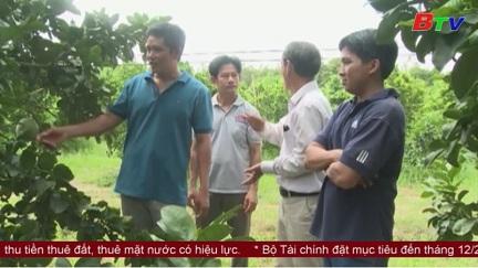 Tuổi trẻ huyện Bắc Tân Uyên trên con đường lập thân, lập nghiệp