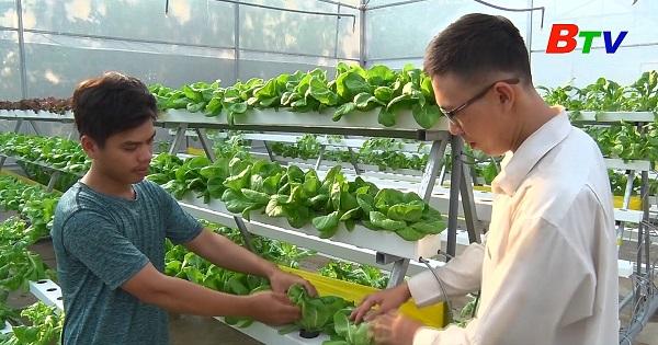 Tiếp tục phát triển nông nghiệp đô thị, nông nghiệp ứng dụng công nghệ cao