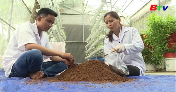 Quy trình trồng nấm hoàng đế